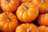 Herbst-Kochkurs